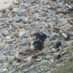 limpieza playas semana santa 2015 (5)